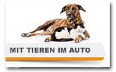 Tipps und Tricks für Reisen mit Hunden und anderen Tieren